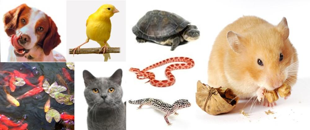 animalerie-bandeau