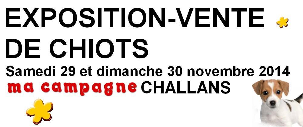 EXPOSITION VENTE DE CHIOTS