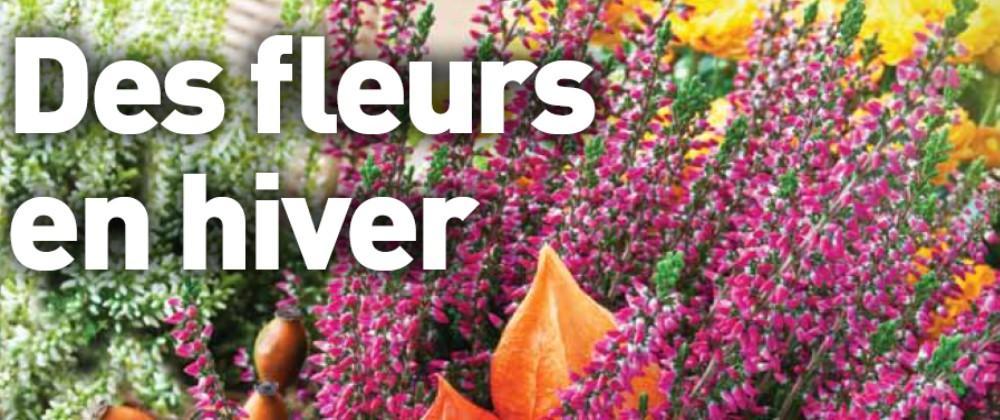 Fleur hiver bannière nov 2014