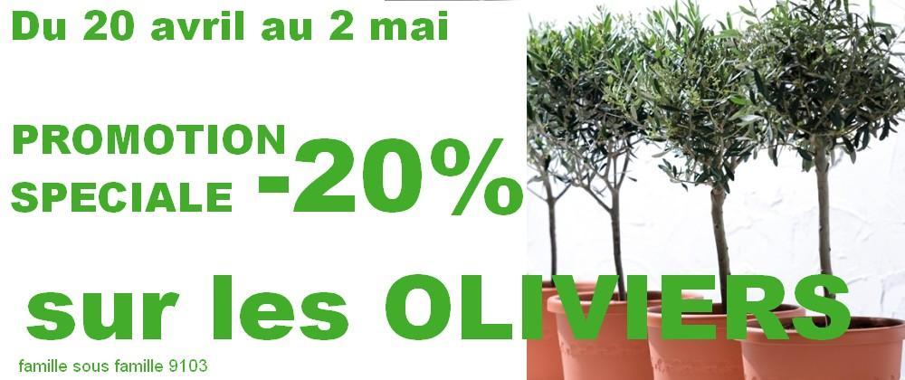 Oliviers -20% du 20/04 au 2/05