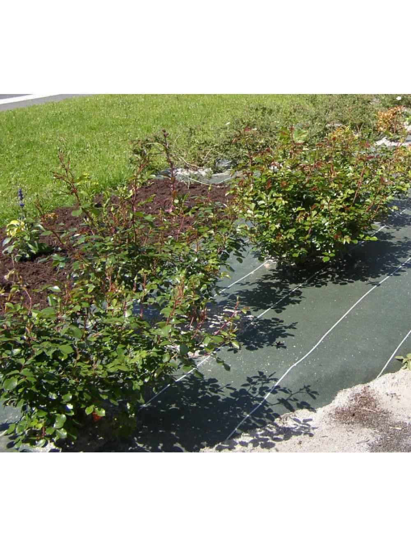 Toile tiss e largeur 2 10m le m tre le paillage jardin for Toile de jardin castorama