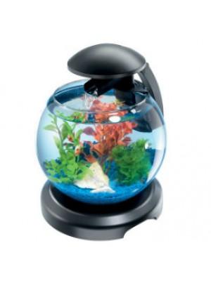 Les aquariums les poissons animalerie for Aquarium zolux