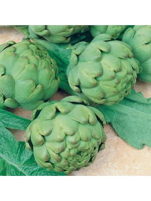 R sultats de recherche pour 39 plants d 39 artichaut perp tuel 39 - Artichaut gros vert de laon ...