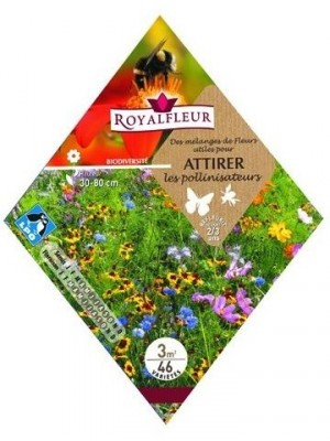 Mélange de fleurs pour pollinisateurs
