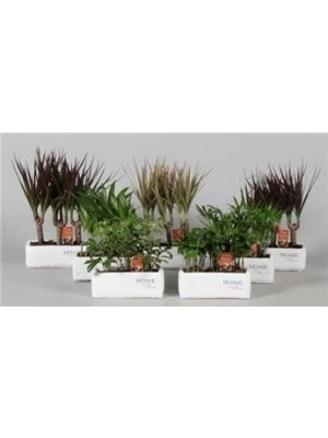 Plantes vertes variées céram