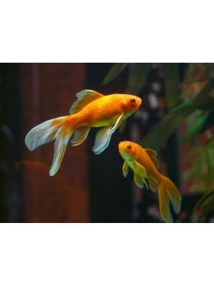 Les poissons animalerie for Animalerie poisson