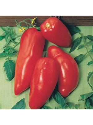 Tomate des Andes