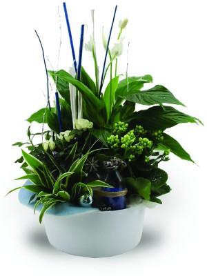 Composition florale pot Ø 24cm