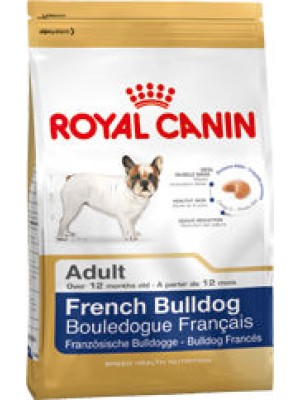 BOULEDOGUE FRANCAIS ADULT S0142916