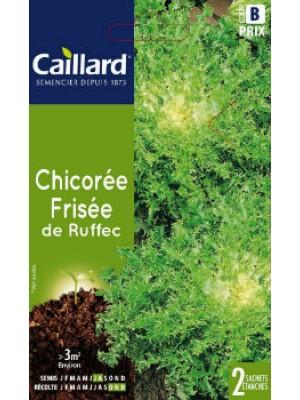 CHICOREE FRISEE DE RUFFEC