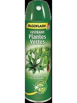 Lustrant plantes vertes